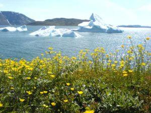 Natuur Groenland